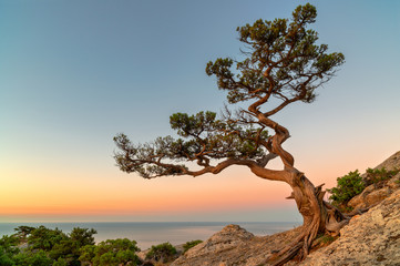 Lonely tree on the rock above the sea