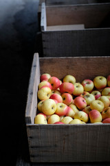 Wood box of fresh picked apples