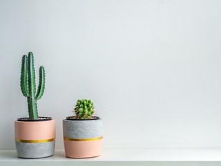 Fototapeta Modern geometric concrete planters. Beautiful painted concrete pots. obraz