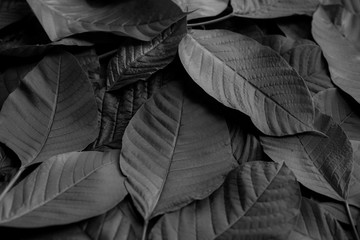 Textures of natural abstract black leaves for tropical leaf background, black and white images