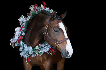 Tuinposter Paarden Christmas Horse