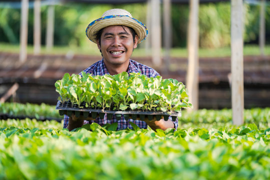Asian farmer in hat holding young seedlings in his farm in the vegetable garden
