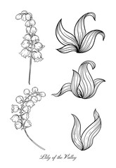 Lily of the valley, may-lily Element for design. Outline hand drawing vector illustration. In art nouveau style, vintage, old, retro style. In botanical style.