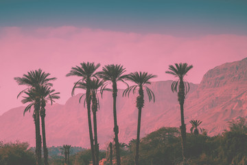 Poster Candy pink A row of tropic palm trees against mountains. Silhouette of tall palm trees. Tropic evening landscape. Beautiful tropical nature