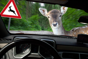Vorsicht Wildwechsel - mit Warnschild