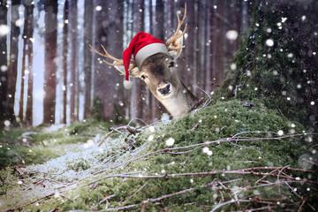 Rentier mit Weihnachtsmütze schaut hinter einem Baum hervor