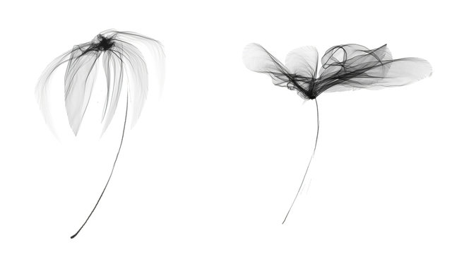 Watercolor transparent flowers. Black white isolated on white background. X-ray ornament.