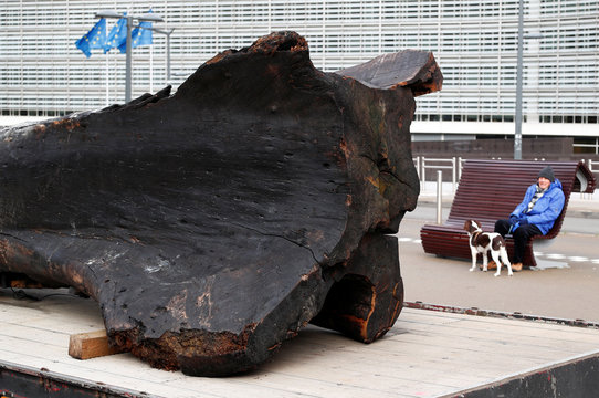 A burnt tree trunk is seen during a protest against the destruction of the Amazon forest, in Brussels
