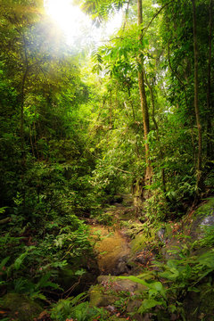 Beautiful landscape view of the rainforest during a ecotourism jungle hike in Gunung Leuser National Park, Bukit Lawang, Sumatra, Indonesia