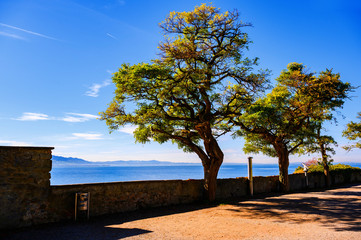 Acacia tress, wall on embankment in Lindau,lake Constance.