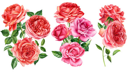 set of bouquet, flowers roses on an isolated white background, watercolor hand drawing, botanical painting