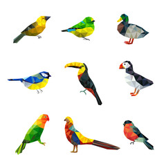Spoed Foto op Canvas Vogels, bijen Polygonal birds. Triangle abstract shapes graphic flying birds collection asian animals vector characters collection. Illustration parrot and cockatoo, duck and bullfinch bird