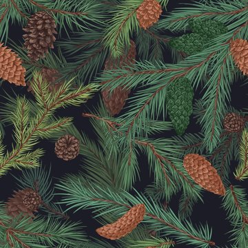 Colorful realistic seamless pattern with conifer branches and cones. Hand drawn background with evergreen plant. Detailed engraved backdrop with coniferous tree. Vector illustration.