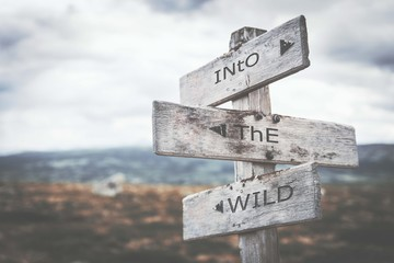 Into the wild signpost. Sign, road, nature, wilderness, message, rustic concept.