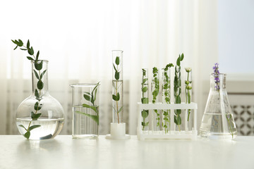 Test tubes and other laboratory glassware with different plants on table indoors