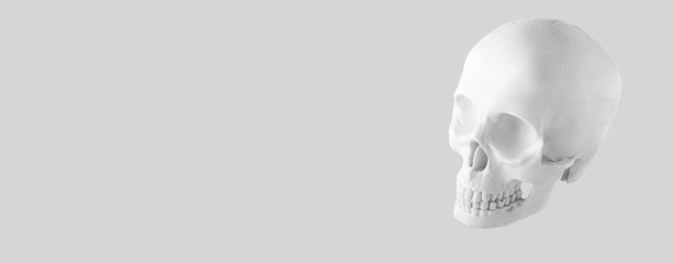 Banner skull. medical. anatomy. human skull