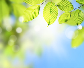 Closeup nature view of green leaf on blurred greenery background in garden with copy space and background natural green plants landscape, ecology,