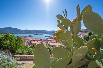 Kaktusfeige auf der Insel Elba