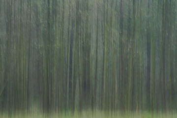 Abstract nature : Digital art, streak effect, artistic blur forest in Poland, Europe. Art of nature: natural structures / texture