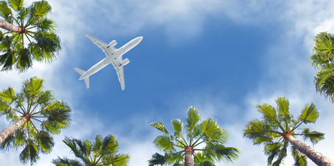 Foto op Plexiglas Vliegtuig Passenger airplane flying above the tropical palm trees. Bottom view of the aircraft.
