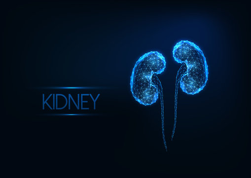 Futuristic glowing low polygonal human kidneys isolated on dark blue background.