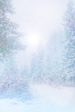 beautiful winter landscape trees in snow
