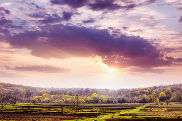 Photo sur Toile Grenat Spring landscape with forest in the distance and beautiful sky during sunset_