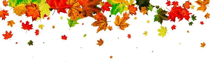 Leaves background. Autumn season pattern isolated on white back