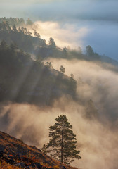 Morning in the mountains, fog in the valley and forest on the slope