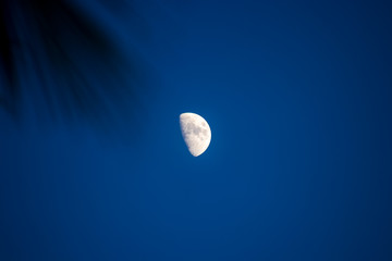 Third Quarter phase of the moon waxing gibbous