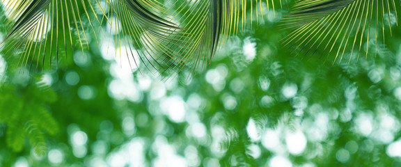 Green leaves pattern for summer or spring season concept,leaf of palm with bokeh textured background