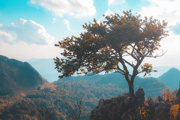 Alone tree on the mountain hill cliff in the forest at the sunset or evening time.