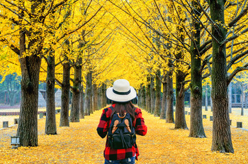 Wall Mural - Woman traveler with backpack walking at row of yellow ginkgo tree in Nami Island, Korea.