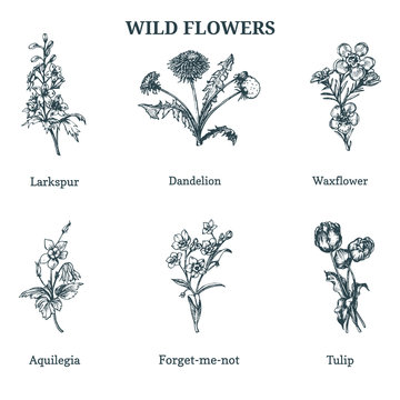 Wild flowers vector illustrations. Hand drawn sketches set in engraving style. Botanical plants isolated.