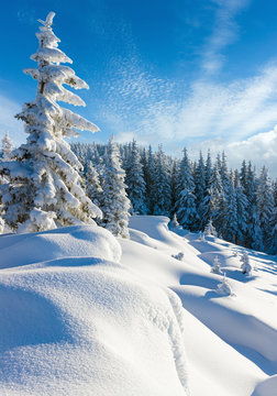 Morning winter calm mountain landscape with beautiful freezed fir trees