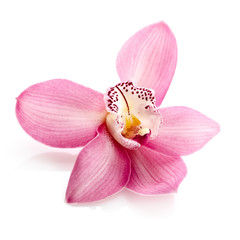 Spoed Fotobehang Orchidee Pink orchid, close up