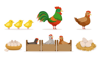Poultry Farm With Hens In Crates, Rooster, Eggs And Chickens Vector Illustration Set Isolated On White Background