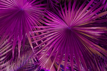 Fotomurales - Tropical pink palm Leaves in exotic endless summer country