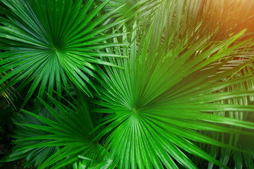 Fotomurales - Tropical green palm Leaves in exotic endless summer country with sunlight