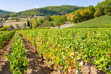 Scenic vineyard in Burgundy, France