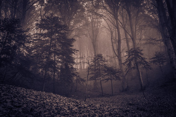 Enchanted autumn forest in fog in the morning autumnal day