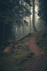 Alpine path among the trees shrouded in fog