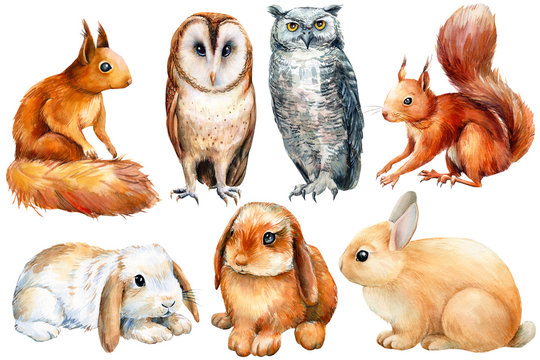 watercolor, set of animals bunnies, owls, squirrels on an isolated white background, poster forest inhabitants