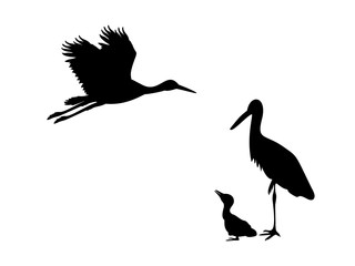 Family of storks. Silhouettes of birds