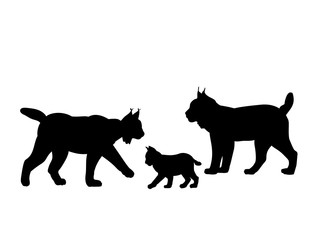 Family of lynxes . Silhouettes feline animals