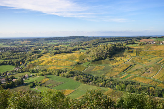 Vineyards near Chateau Chalon, Departement Jura, Franche-Comte, France