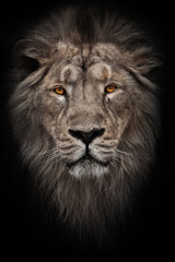 A bleached photo of a portrait of a maned (, hair) powerful male lion in night darkness with bright glowing orange eyes, isolated on a black background