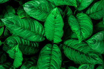 tropical leaves, abstract green leaves pattern texture, nature background