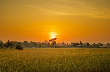 Foto op Canvas Meloen Rice fields where the sun is rising in the morning.