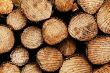 Poster Firewood texture Close up wooden stacked sawn logs for background or abstraction